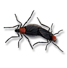 torsalo flies and mosquitoes relationship problems